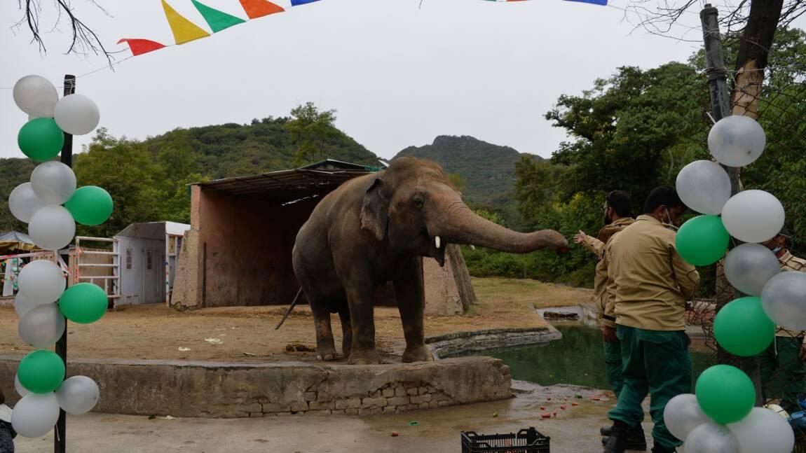 Pakistan: fête d'adieux pour un éléphant maltraité transféré au Cambodge