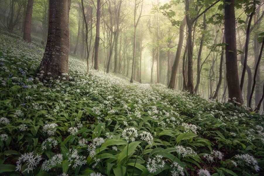 Brume forestière