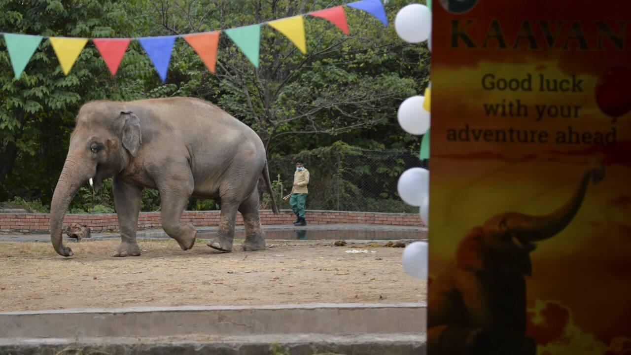 Cher au Pakistan avant le transfert au Cambodge d'un éléphant maltraité