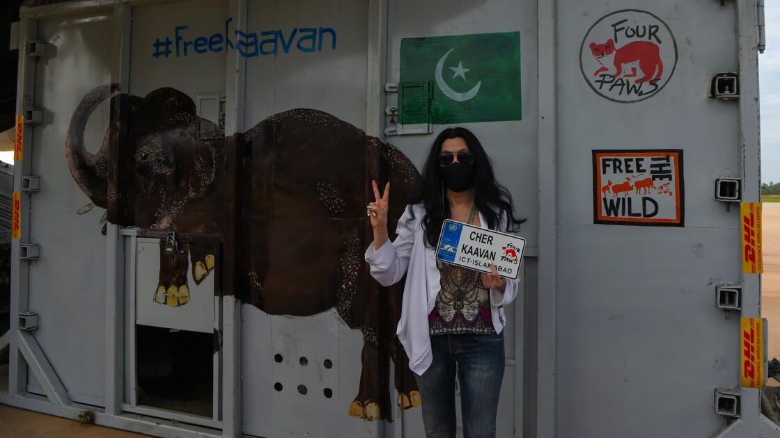 La chanteuse Cher accueille au Cambodge l'éléphant maltraité du Pakistan