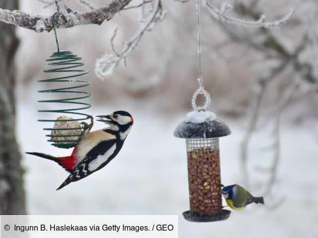 Avec cette appli, nourrissez, observez et comptez les oiseaux pour faire avancer la science