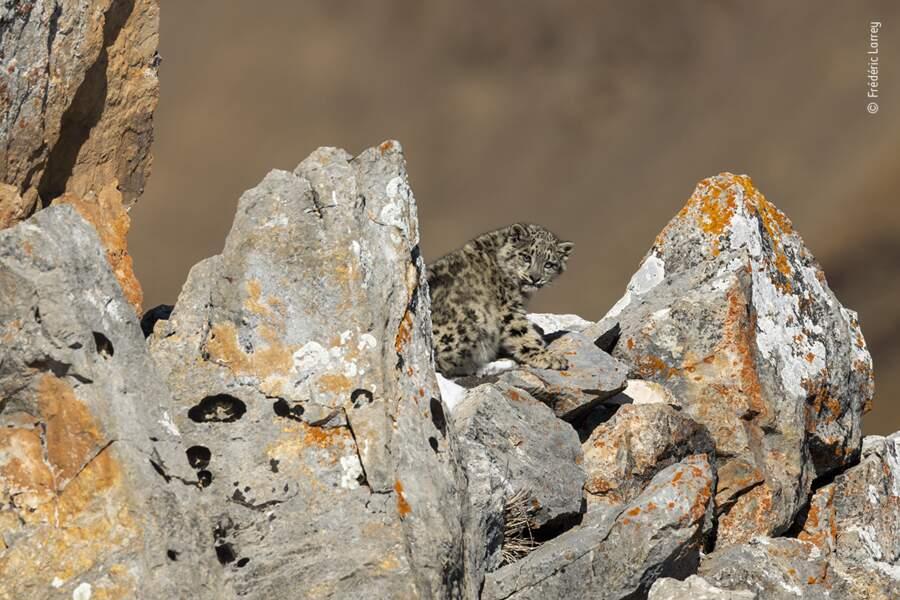 Cache-cache au milieu des rochers
