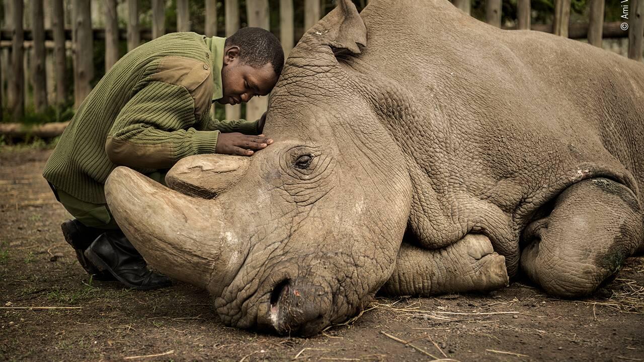 Votez pour le prix du public du Wildlife Photographer of the Year 2020