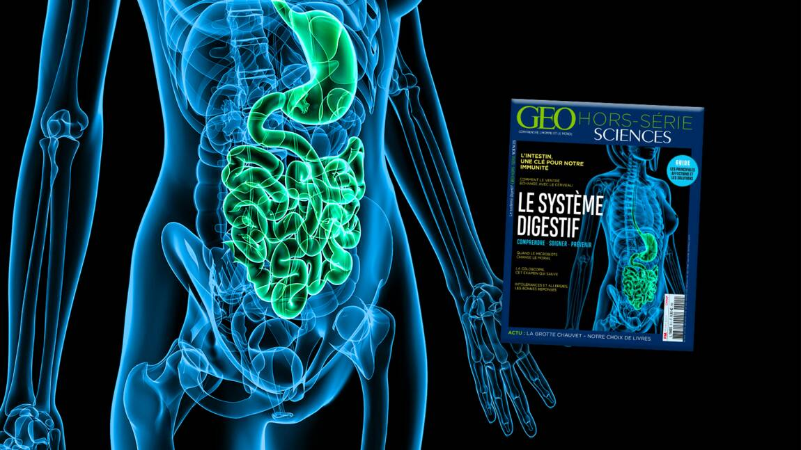 Le ventre, ce second cerveau, au sommaire du nouveau hors-série GEO Sciences