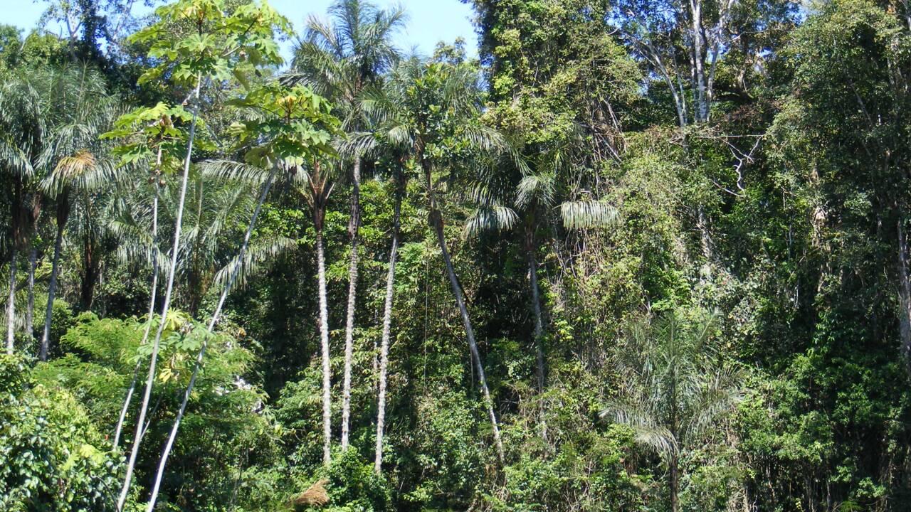 Protéger les arbres pour lutter contre le changement climatique coûtera (très) cher