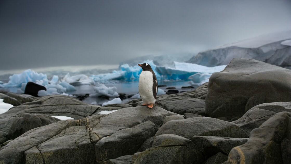 Sebastian Copeland, le photographe aventurier qui conjugue Antarctique et urgence climatique
