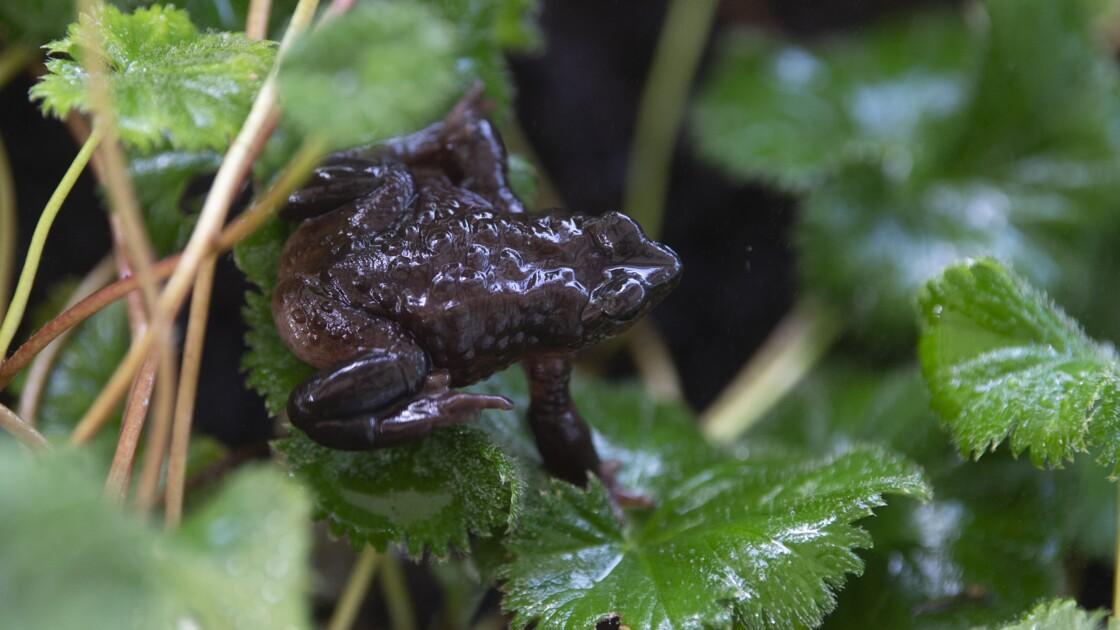L'UICN rajoute 31 espèces éteintes et 3000 espèces menacées à sa liste rouge
