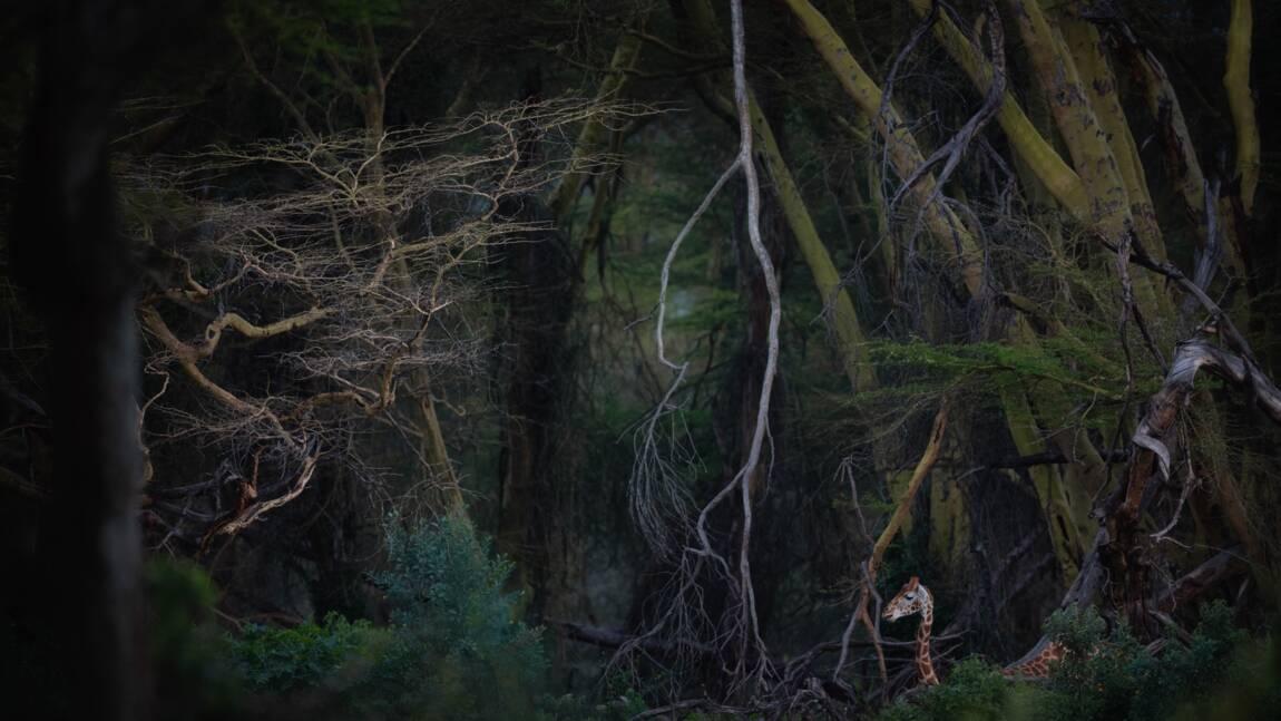 Les plus belles photos primées par le Nature Photographer of the Year 2020