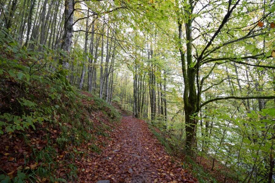 La forêt d'Iraty, au Pays Basque