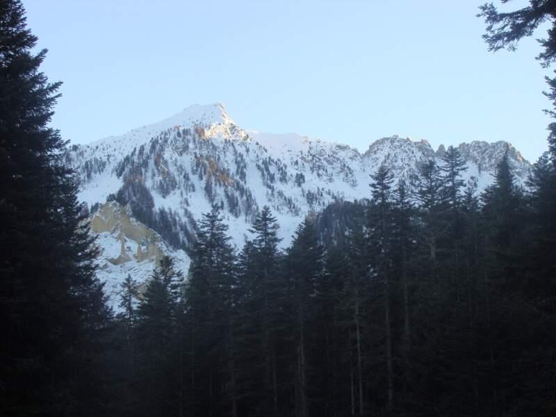 La forêt de Boscodon, dans les Hautes-Alpes
