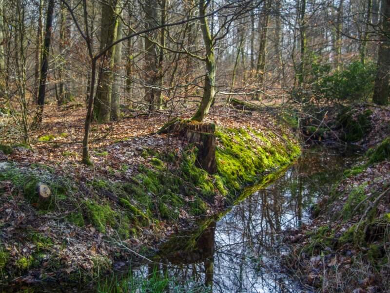 La forêt de Haguenau, en Alsace