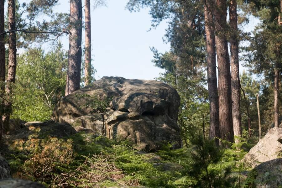La forêt de Fontainebleau, en Seine-et-Marne