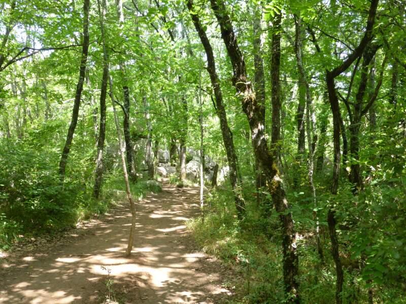 Le bois de Païolive, en Ardèche