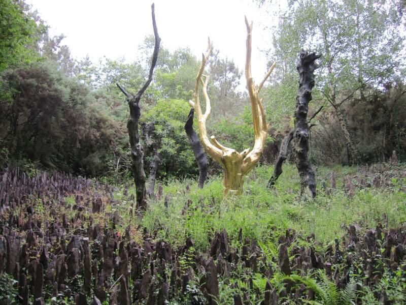 La forêt de Paimpont ou Brocéliande, en Bretagne