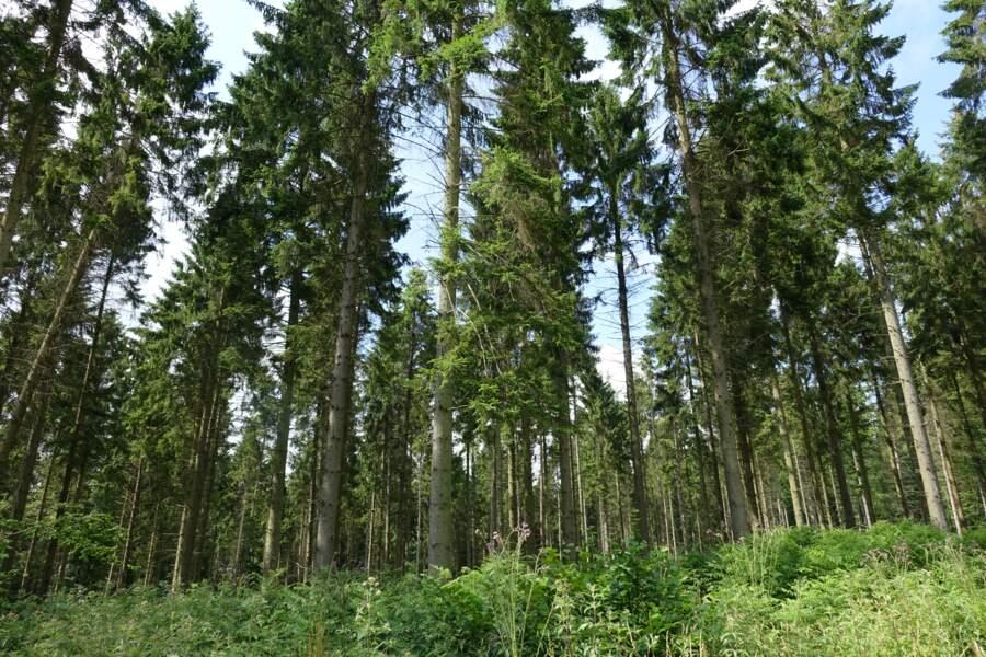 La forêt d'Eawy, en Normandie
