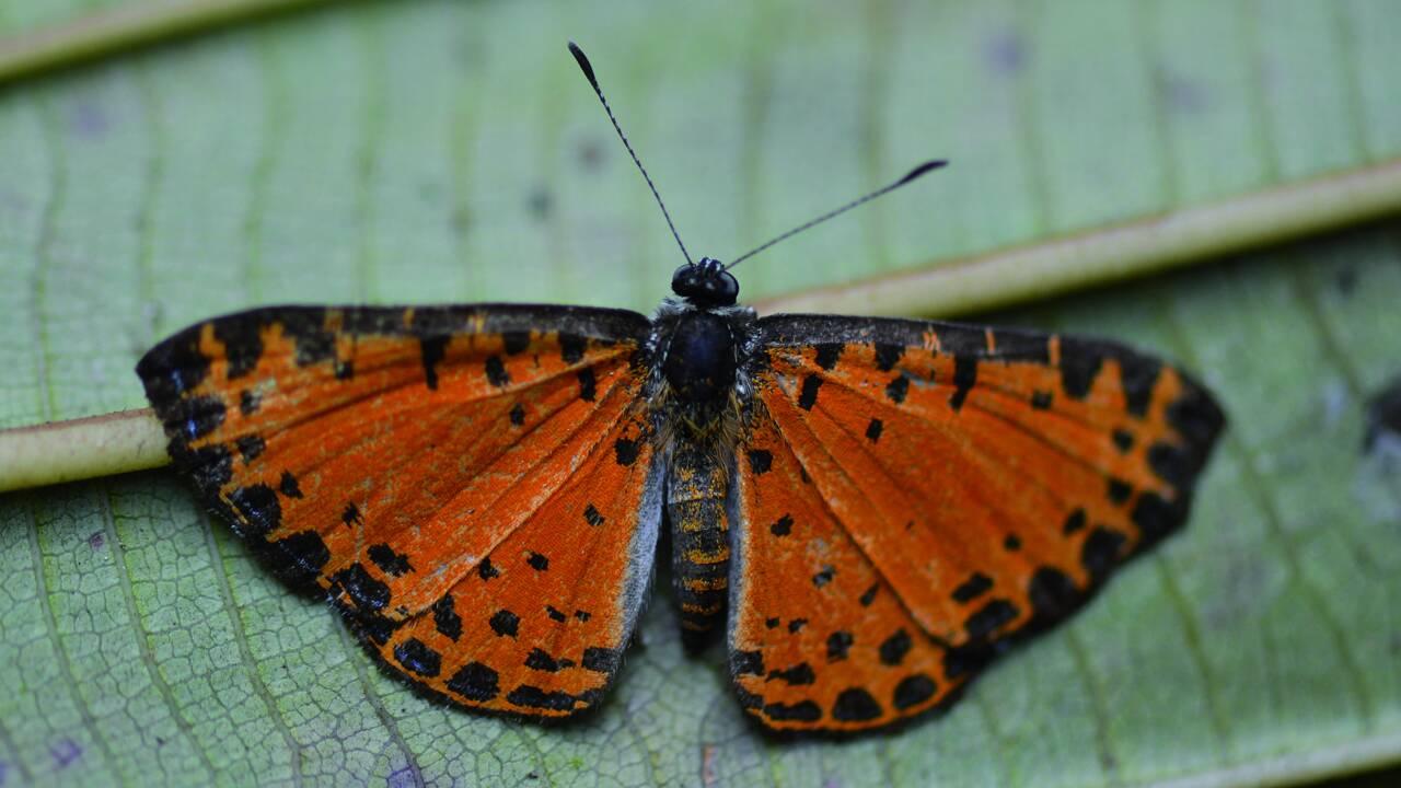 Une vingtaine de nouvelles espèces identifiées dans une vallée de Bolivie