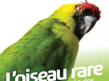 Musée des Confluences : une exposition sur les oiseaux rares