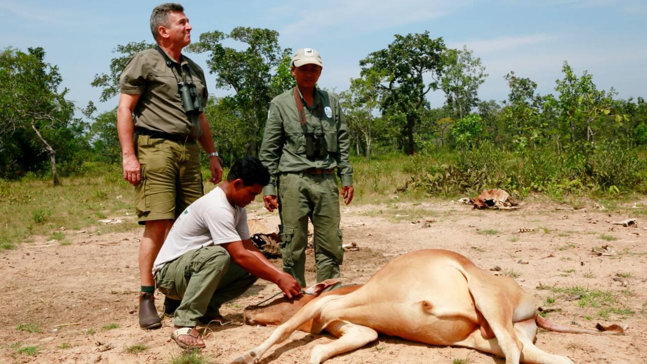 """Au Cambodge, il se démène pour construire un """"paradis pour animaux"""""""