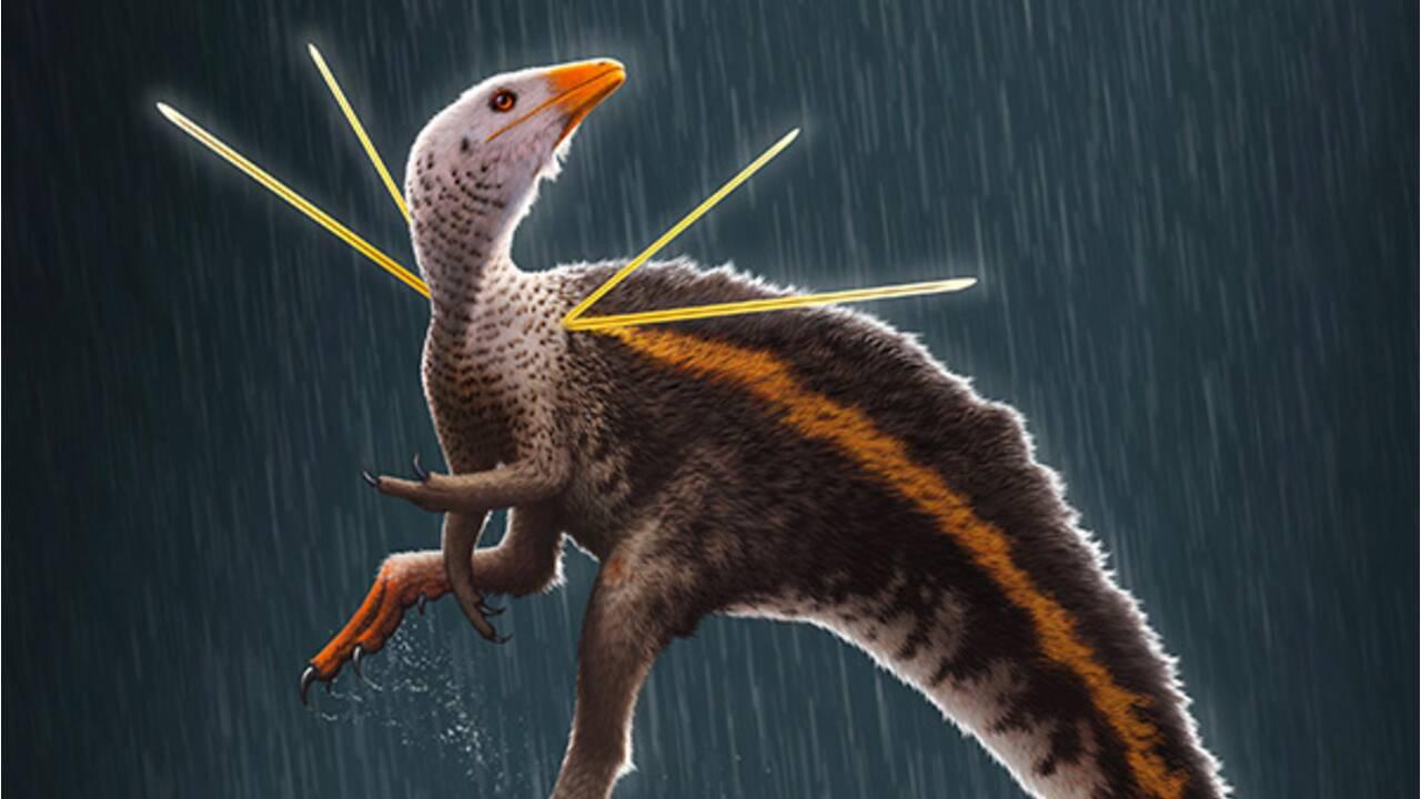 Crinière, pics... Visez un peu le look d'enfer de ce petit dinosaure récemment découvert