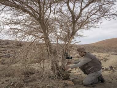Ugo Mellone, un photographe au chevet de la grande faune du Sahara