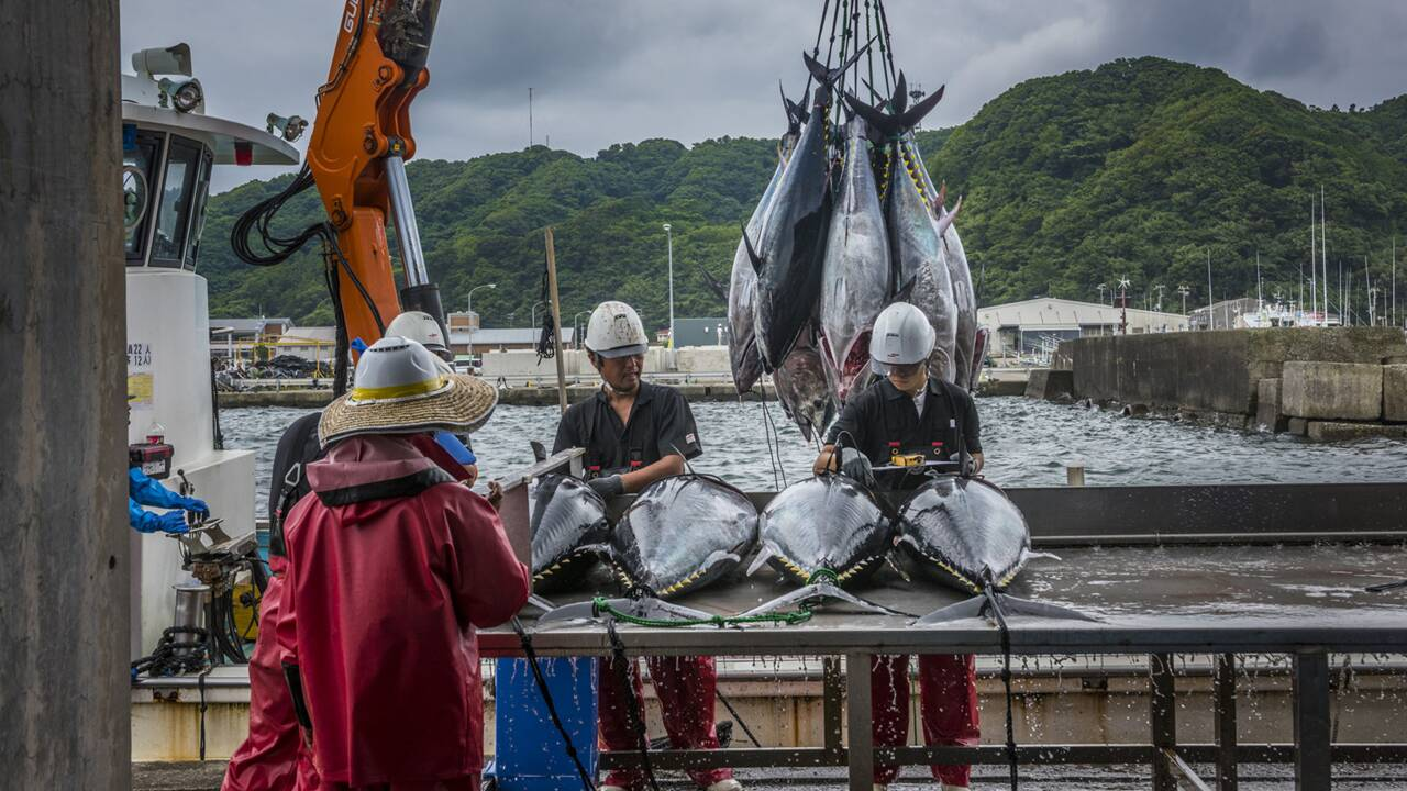 La pêche mondiale en cinq chiffres chocs