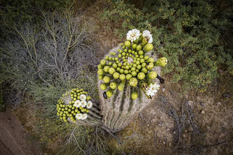 De précieuses plantes à défendre
