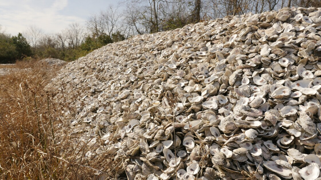 Sur les côtes du Texas, les coquilles d'huîtres sont recyclées en récifs