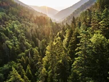 Les 10 bonnes nouvelles pour l'environnement et les animaux de 2020