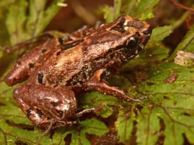 Le top 10 des nouvelles espèces identifiées en 2020