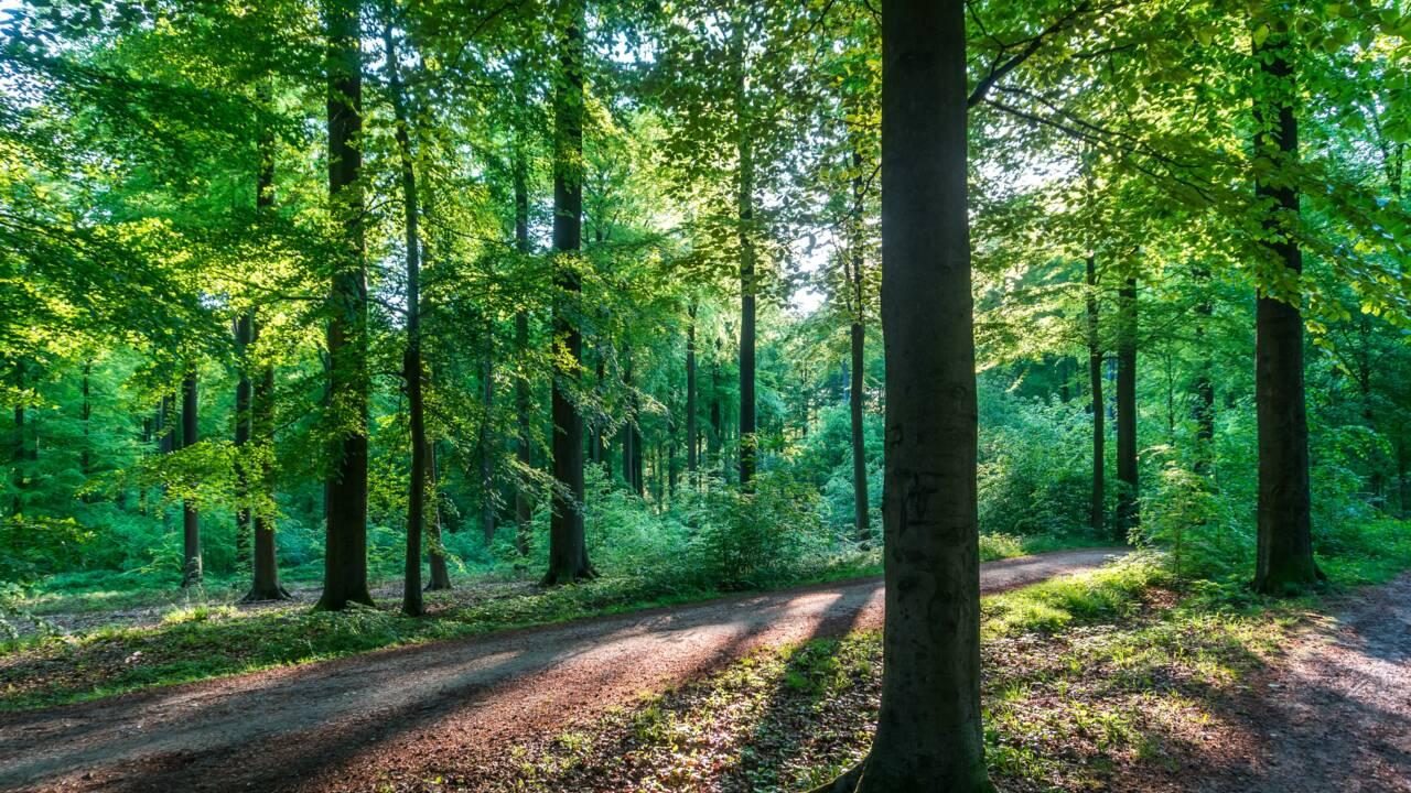 Kopfkino, Heimat, Waldeinsamkeit… 20 mots allemands intraduisibles