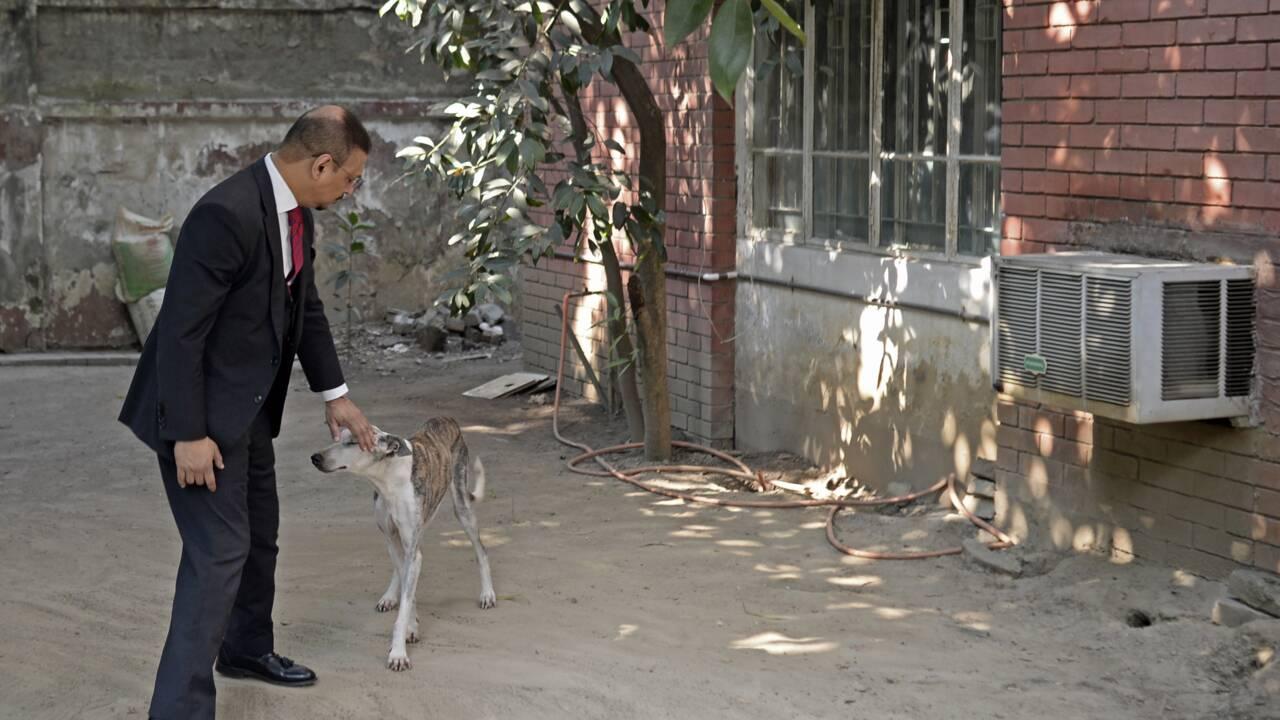 Le Sarail, chien de chasse du Bangladesh, une espèce canine à sauver