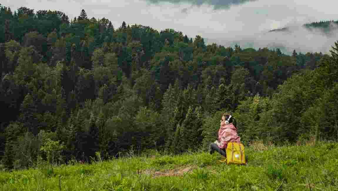 5 podcasts pour découvrir les petits secrets des arbres