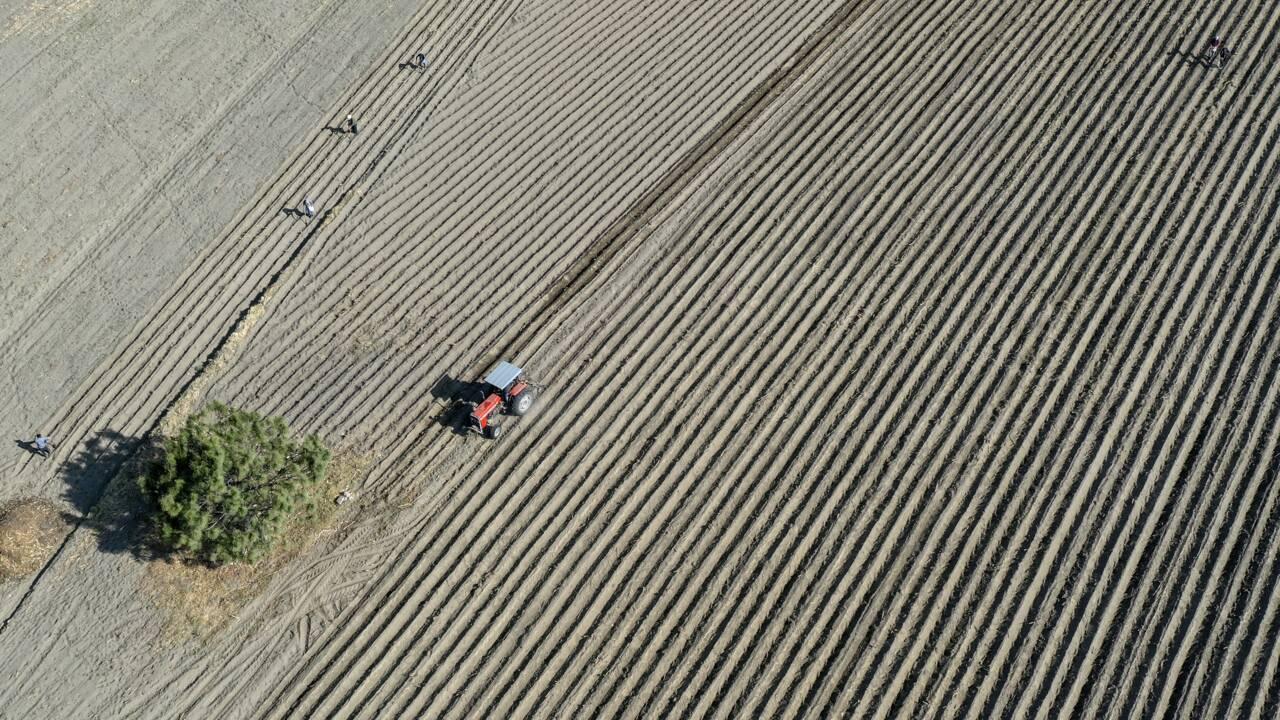 Le Mexique s'engage à bannir le maïs OGM et le glyphosate