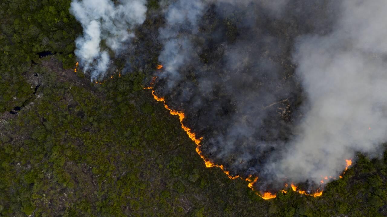 Brésil: près de 8.500 km2 de forêt amazonienne déboisés en 2020