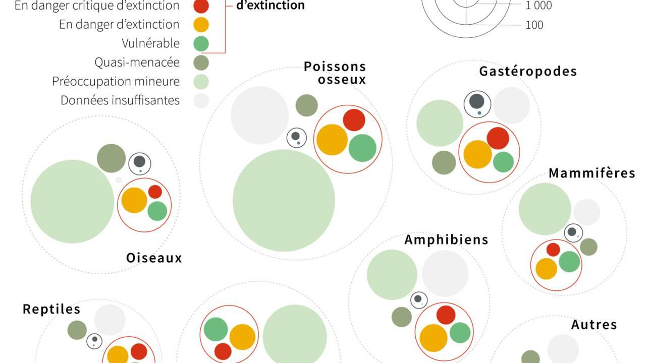 """La protection de la biodiversité au coeur du Sommet """"One Planet"""" à Paris"""