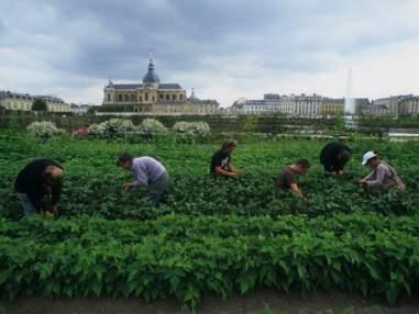 A Versailles, Louis XIV a imaginé le plus futuriste des potagers