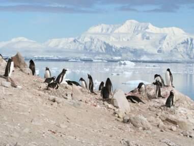 A la découverte de l'Antarctique