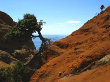 Chili : la végétation de l'île de Robinson Crusoé menacée