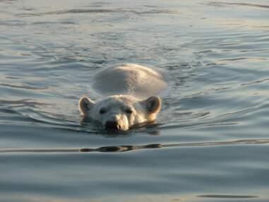 Alaska : le crépuscule des ours