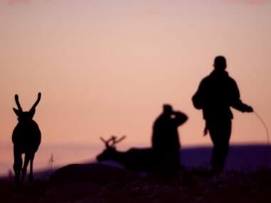 L'élevage de rennes chez les Samis, en Laponie