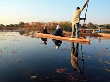 Botswana : safari en Afrique australe