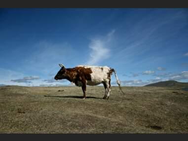 Voyage initiatique en Mongolie, la terre des chamans