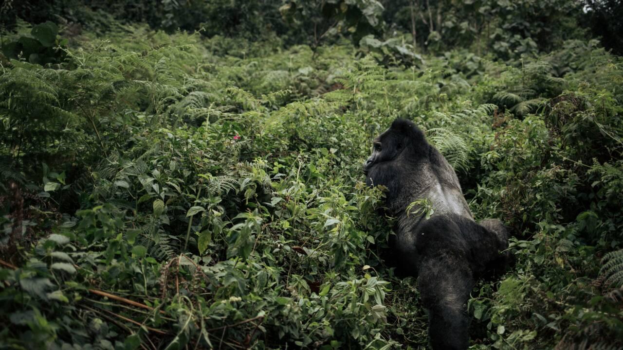 Quels sont les animaux les plus menacés par les conflits dans le monde ?