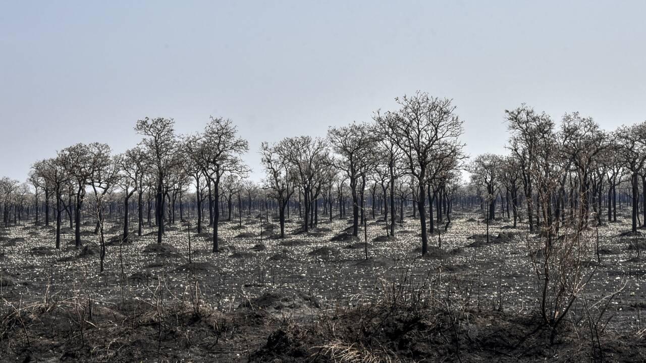 La destruction de la forêt vierge tropicale en hausse de 12% en 2020