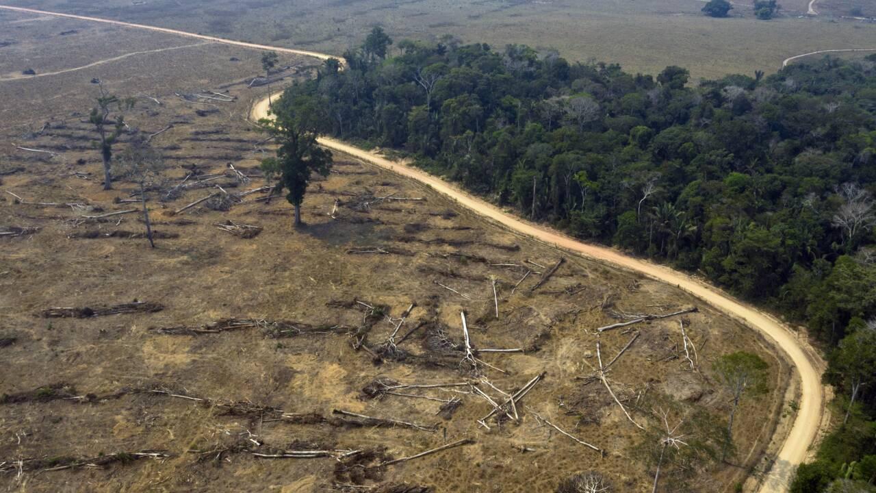 Brésil : 94% de la déforestation en Amazonie est illégale, selon un rapport