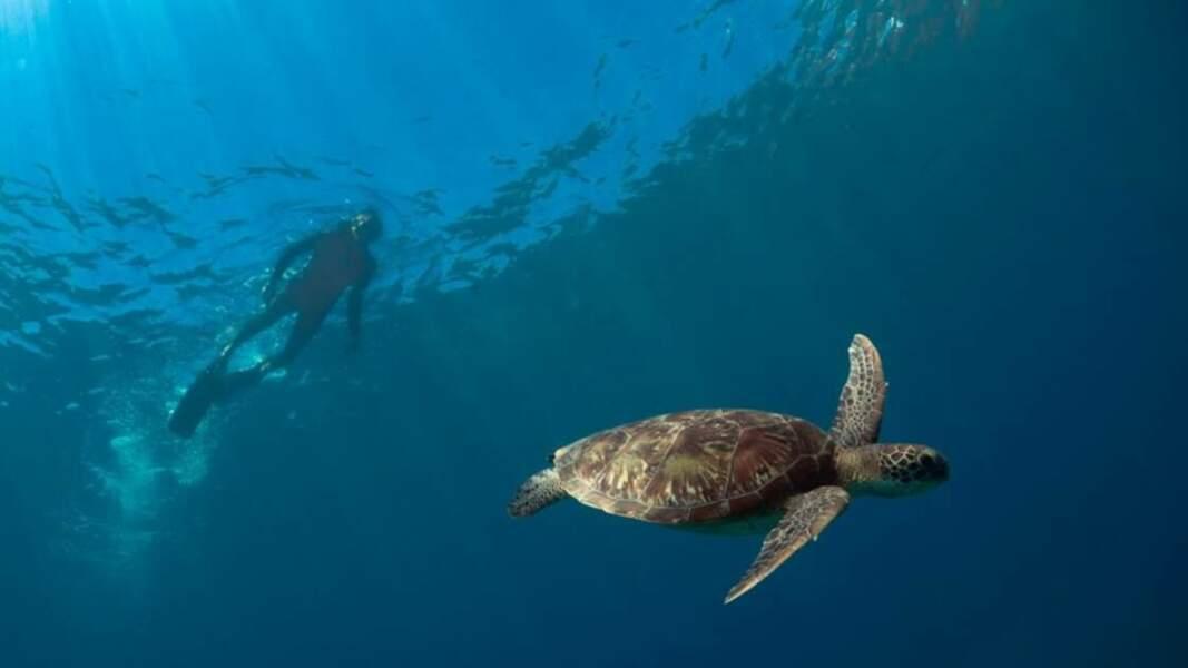 À la rencontre d'une tortue midas
