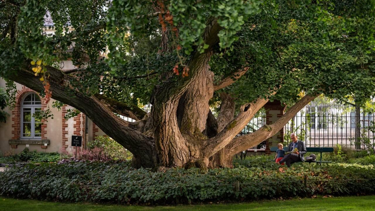 Arbre de l'année 2020 : et les plus beaux arbres du patrimoine français sont...