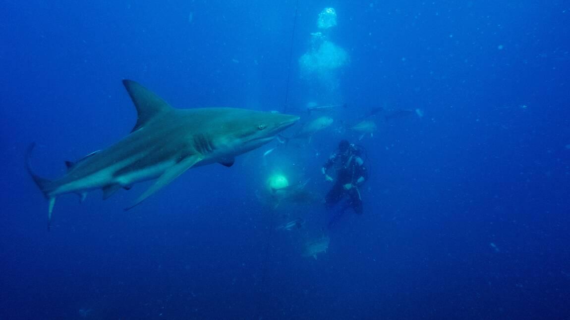 """Filets anti-requins: des """"mailles de la mort"""" pour protéger les Sud-Africains"""