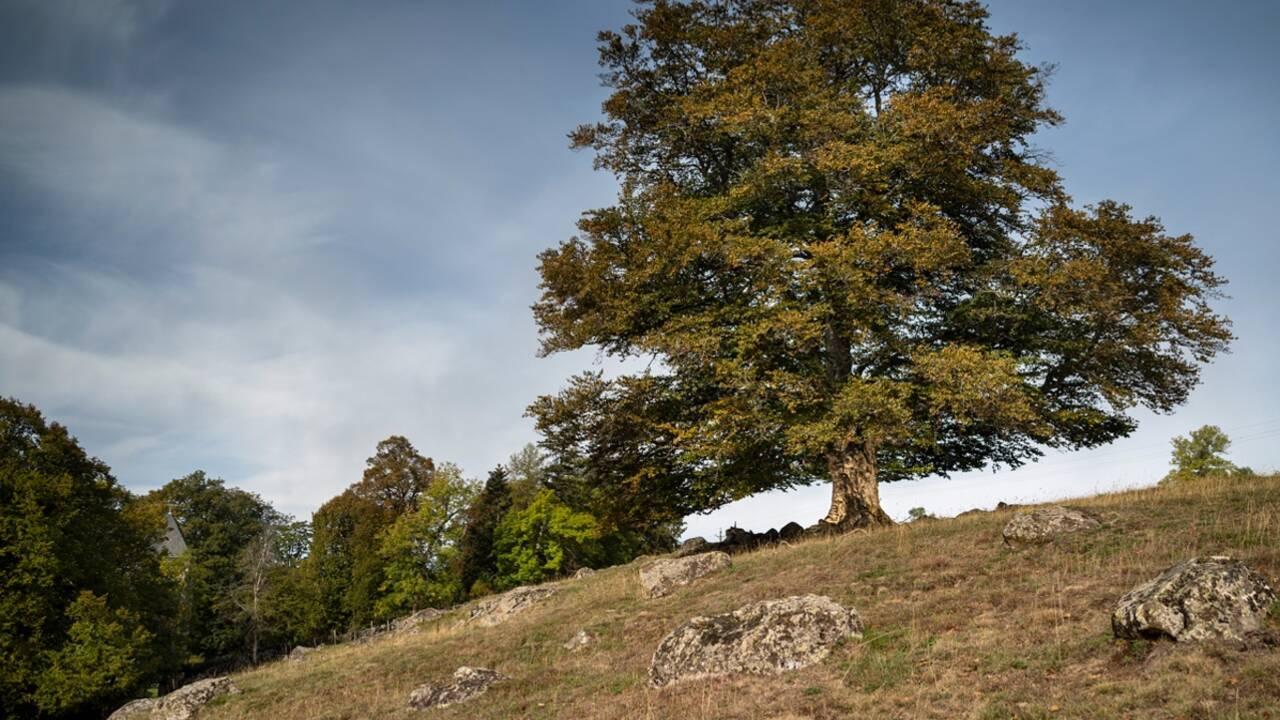 Arbre de l'année 2021 : c'est le moment de proposer votre arbre préféré au concours