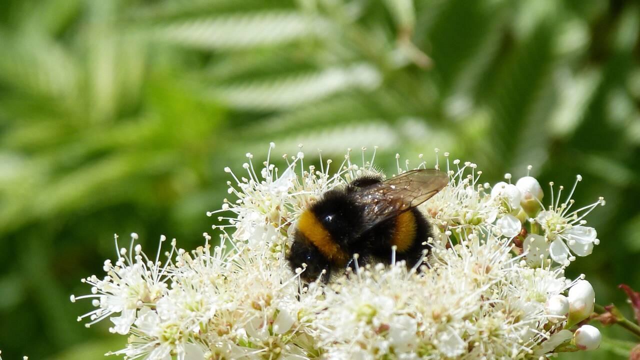De nouvelles études alertent sur le déclin des insectes et livrent des solutions pour l'enrayer